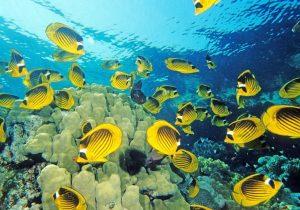 Fauna and Flora of the Maldives