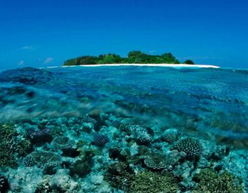 Coral Reefs of the Maldives
