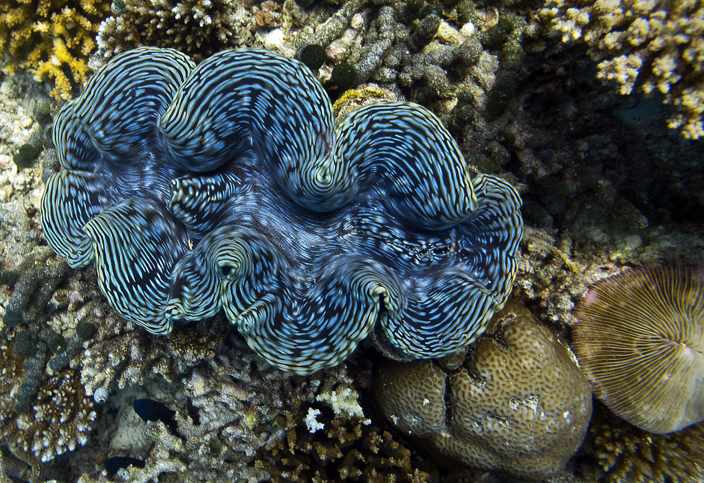 coral reefs of the maldives the maldives expert