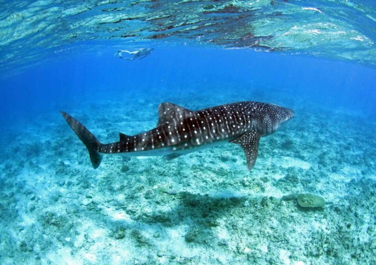 South Ari Atolls (Alifu Dhaalu)