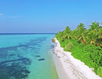 Common Plants of the Maldives