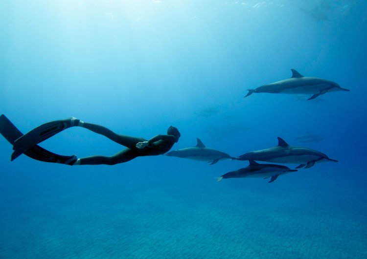 Freedivers of the Maldives