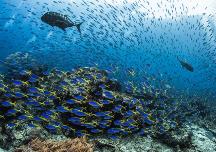 Diving in the North Ari Atoll -The Halaveli Region