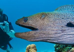 Diving in the Faadhippolhu Atoll Islands (Lhaviyani) – The Fushifaru Region