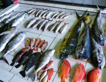Top Attractions in Malé – The Fish Market