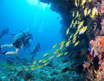 Underwater Snorkeling Experiences at Jumeirah Dhevanafushi Luxury Resort