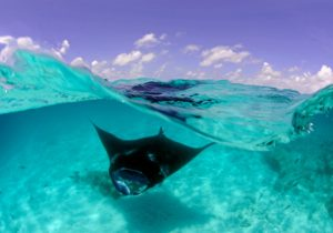 Dive with Manta Rays in Hanifaru Bay