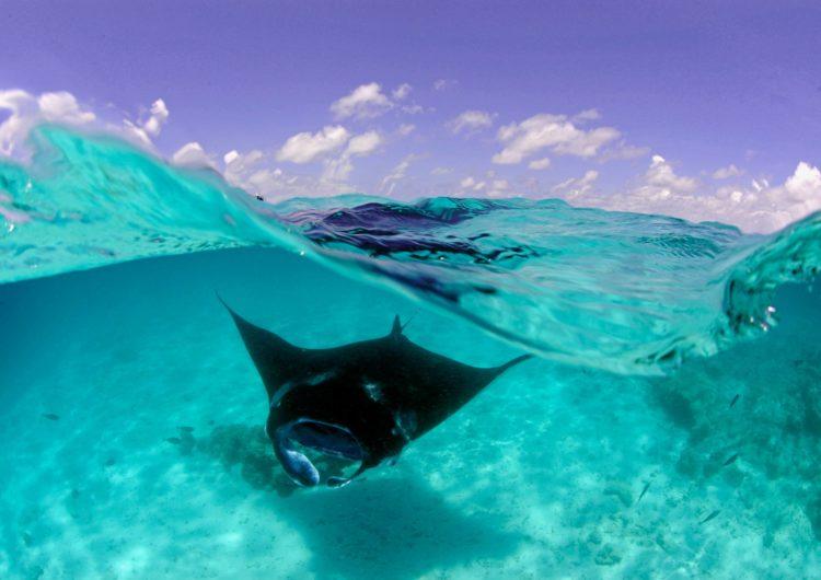Dive with Manta Rays in Hanifaru Bay