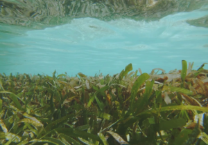 Equator Village Joins Nationwide Campaign to Protect the Maldives' Seagrass